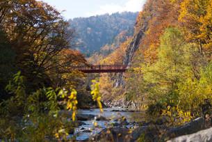 定山渓 二見吊橋と渓谷の紅葉の写真素材 [FYI04633586]