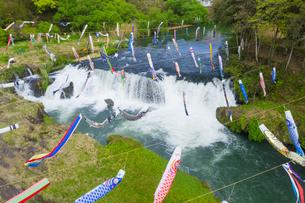 鯉のぼりと湯之尾滝の写真素材 [FYI04633593]