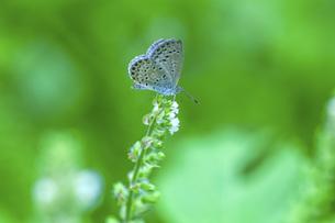 蝶の写真素材 [FYI04633633]