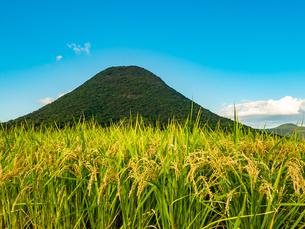 【香川県 丸亀市】米を耕した田んぼと讃岐富士 飯野山の写真素材 [FYI04633709]