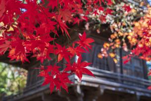 古刹を彩る平林寺の紅葉の写真素材 [FYI04633727]