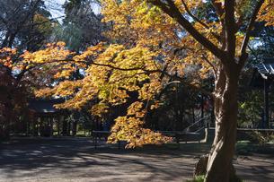 古刹を彩る平林寺の紅葉の写真素材 [FYI04633728]