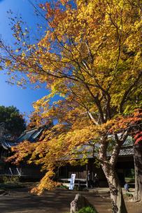 古刹を彩る平林寺の紅葉の写真素材 [FYI04633729]