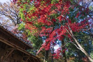 古刹を彩る平林寺の紅葉の写真素材 [FYI04633730]