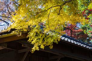古刹を彩る平林寺の紅葉の写真素材 [FYI04633731]