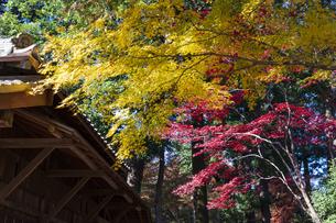 古刹を彩る平林寺の紅葉の写真素材 [FYI04633733]