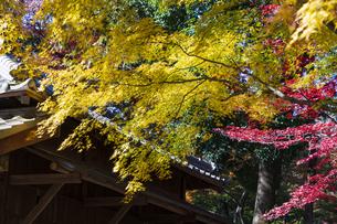 古刹を彩る平林寺の紅葉の写真素材 [FYI04633738]