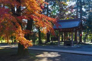 古刹を彩る平林寺の紅葉の写真素材 [FYI04633739]