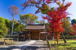 古刹を彩る平林寺の紅葉の写真素材 [FYI04633740]
