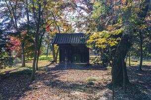 古刹を彩る平林寺の紅葉の写真素材 [FYI04633741]