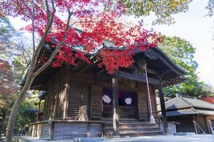 古刹を彩る平林寺の紅葉の写真素材 [FYI04633743]