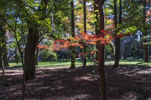 古刹を彩る平林寺の紅葉の写真素材 [FYI04633745]