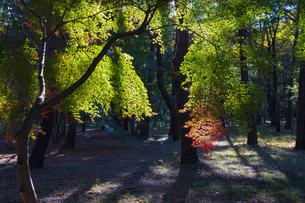 古刹を彩る平林寺の紅葉の写真素材 [FYI04633749]