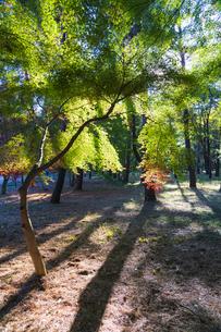 古刹を彩る平林寺の紅葉の写真素材 [FYI04633750]