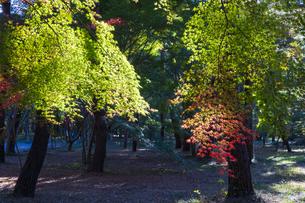 古刹を彩る平林寺の紅葉の写真素材 [FYI04633751]