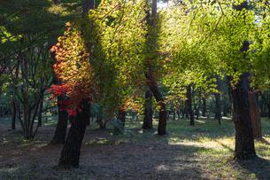古刹を彩る平林寺の紅葉の写真素材 [FYI04633754]
