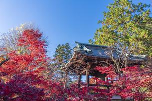 古刹を彩る平林寺の紅葉の写真素材 [FYI04633756]