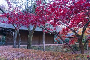 古刹を彩る平林寺の紅葉の写真素材 [FYI04633757]