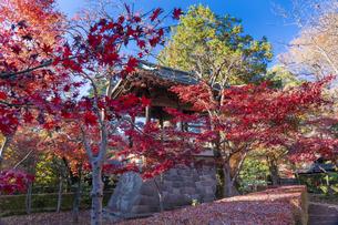 古刹を彩る平林寺の紅葉の写真素材 [FYI04633758]