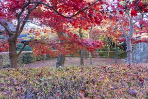 古刹を彩る平林寺の紅葉の写真素材 [FYI04633759]