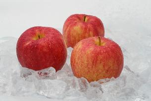 氷の上に載せた3個のリンゴの写真素材 [FYI04633828]
