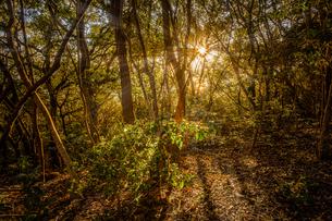 【自然風景】秋の夕方の森林の山の様子の写真素材 [FYI04634527]