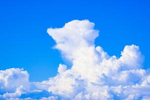 【夏】青空の下の入道雲の写真素材 [FYI04634528]