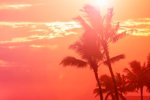 【ハワイ オアフ島】夕空の下のヤシの木 南国イメージの写真素材 [FYI04634595]