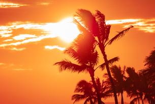 【ハワイ】夕空の下のヤシの木 南国イメージの写真素材 [FYI04634596]