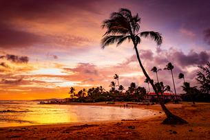 【ハワイ カウアイ島】夕暮れの海とヤシの木の自然風景の写真素材 [FYI04634597]