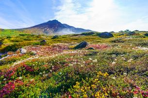 旭岳と花々の写真素材 [FYI04634692]