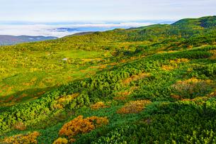 旭岳の紅葉と雲海の写真素材 [FYI04634699]