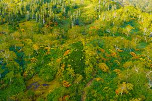 大雪山系旭岳の紅葉の写真素材 [FYI04634700]