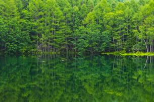鴨が泳ぐ鏡面のような御射鹿池の写真素材 [FYI04634758]