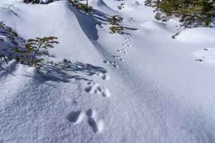 八ヶ岳 坪庭の雪景色 足跡の写真素材 [FYI04634882]