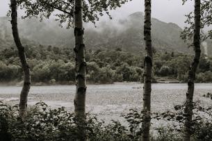 森林の写真素材 [FYI04635039]