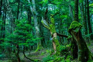 深い緑の森の写真素材 [FYI04635112]
