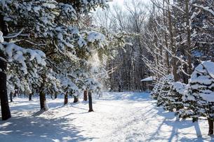 冬の日射しを浴びる公園の写真素材 [FYI04635204]