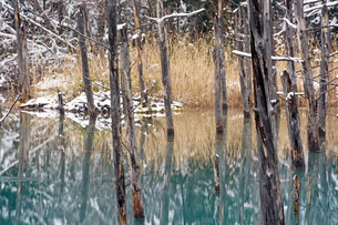 初冬の青い池の写真素材 [FYI04635207]