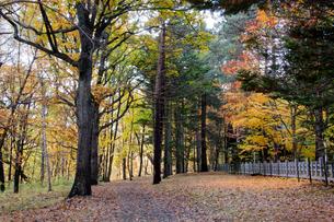 木々が色づく秋の公園の写真素材 [FYI04635208]