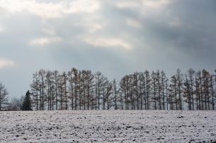 初冬の丘とカラマツ並木の写真素材 [FYI04635221]