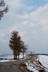 黄葉したカラマツと農村の道路の写真素材 [FYI04635222]