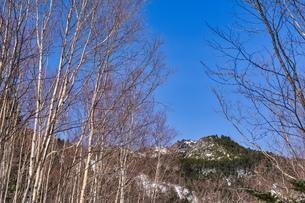 ダケカンバの林の写真素材 [FYI04635333]