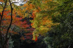 色づく秋の木々の写真素材 [FYI04635353]