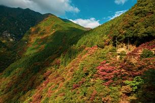 【徳島県 三好市】祖谷渓からみる秋の山の自然風景の写真素材 [FYI04635360]