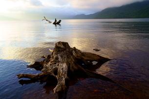 支笏湖 切り株と陽の光3の写真素材 [FYI04635373]