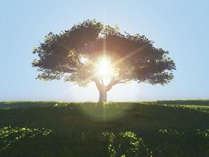 丘に立つ一本の大樹に逆光が射し込むのイラスト素材 [FYI04635552]