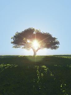 丘に立つ一本の大樹に逆光が射し込むのイラスト素材 [FYI04635553]