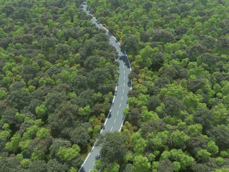 広大な緑の森を貫く一本道のイラスト素材 [FYI04635575]