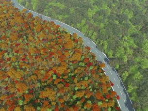 緑と紅葉がせめぎ合う広大な森を貫く一本道のイラスト素材 [FYI04635576]